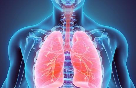 Органы дыхания, фото 1