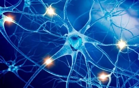 Нервная система, фото 2