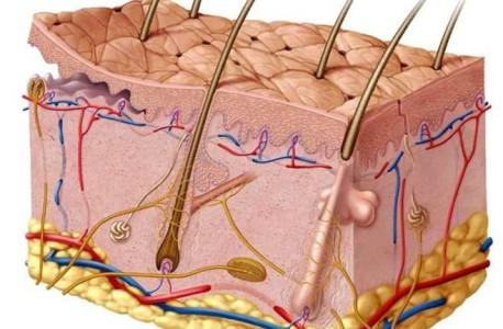 Кожные заболевания, фото 1